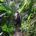 Road to Hana - Dschungel