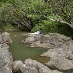 Road to Hana - Bach im Dschungel