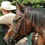 Cowboy und Pferd beobachten den Nachwuchs
