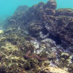 Schnorcheln mit Fischen und Schildkröten